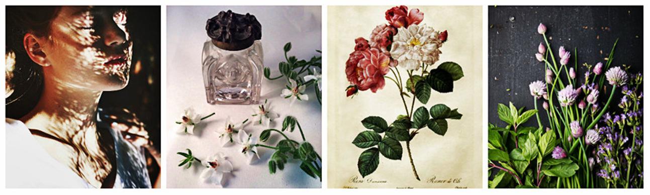 Botanisk Aromautbildning