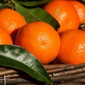 Mandarin eko / organic 10 ml
