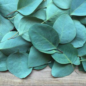 Eterisk olja – Eucalyptus globulus 10 ml