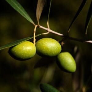 Olivsmör 15 ml
