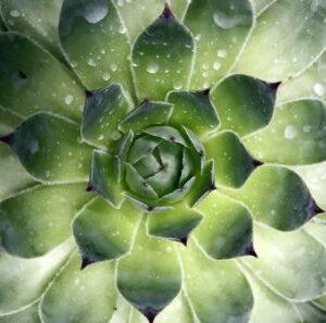 Botanisk livsstilspodd med Lena Losciale