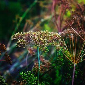 Den sköra ekologin, en vandring i skönhet.