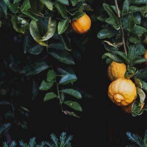 Citron, Timjan och Aleppotvål.